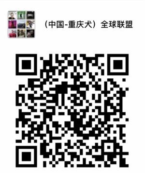 Bamboo Tail QR Code