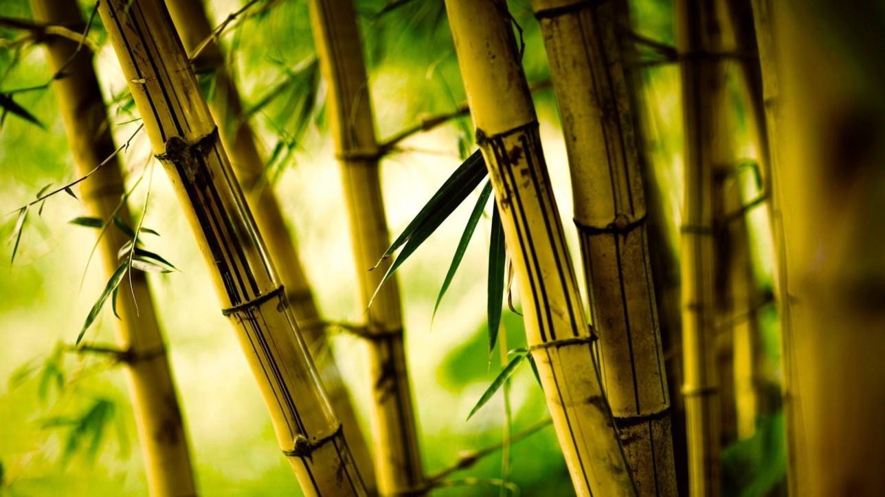 Bamboo tail BG